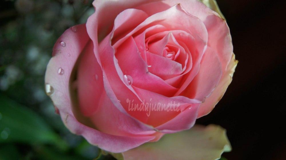 """Mor Alfhild brukte alltid si; """"Gi meg en blomst imens jeg lever""""."""