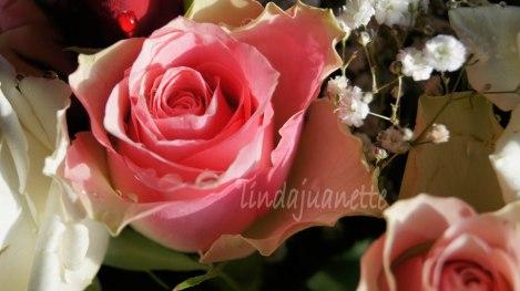 Vakre roser burde man omgi seg med imens man lever og kan nyte de.