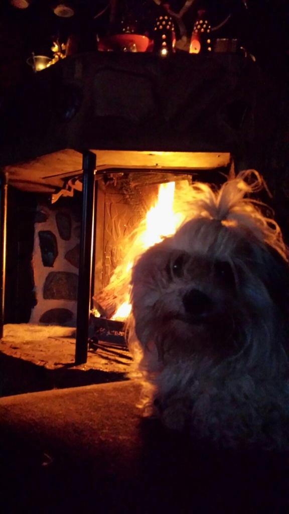 Oscar koser seg foran peisen en sen kveldstime.