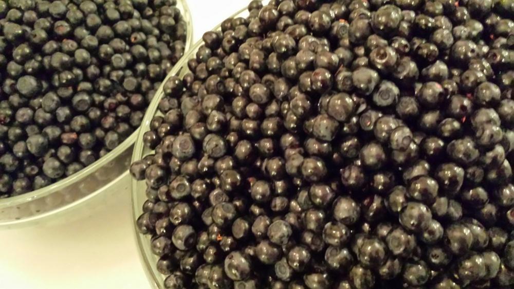 Kan være litt jobb å rense bær, men det er jammen verdt det når man kan kose seg med blåbær langt inni vinteren!